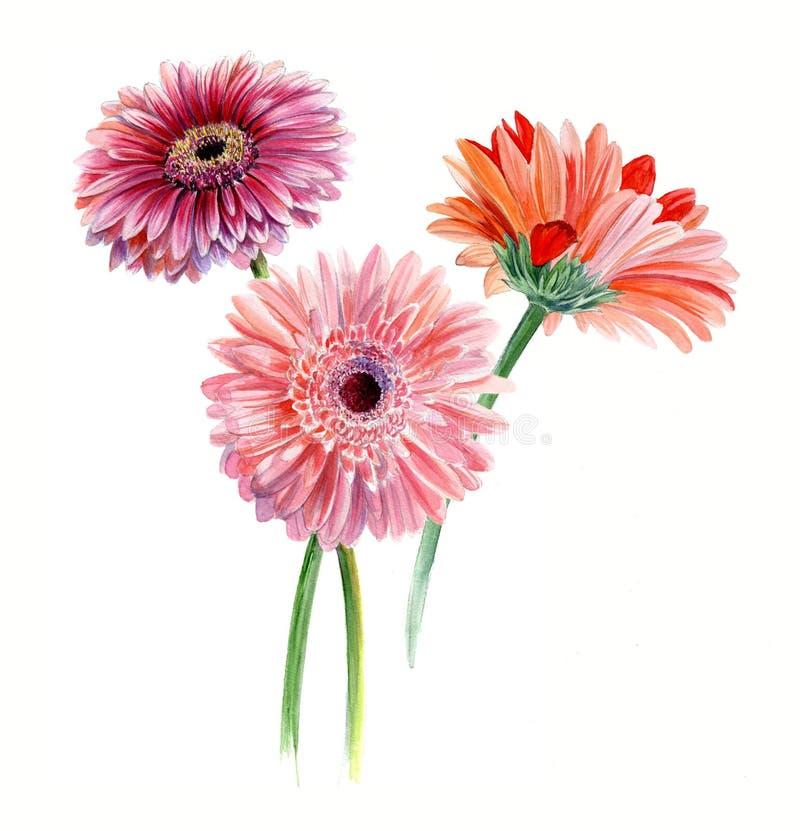 Blumenstrauß von drei Gerberas Aquarell-Skizze Getrennt auf weißem Hintergrund vektor abbildung