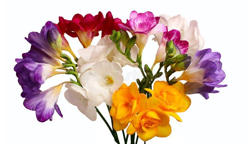 Blumenstrauß von Freesia lizenzfreie stockbilder