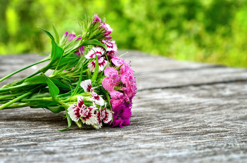Blumenstrauß von kleinen Gartennelken auf einer Tabelle im Garten stockbilder