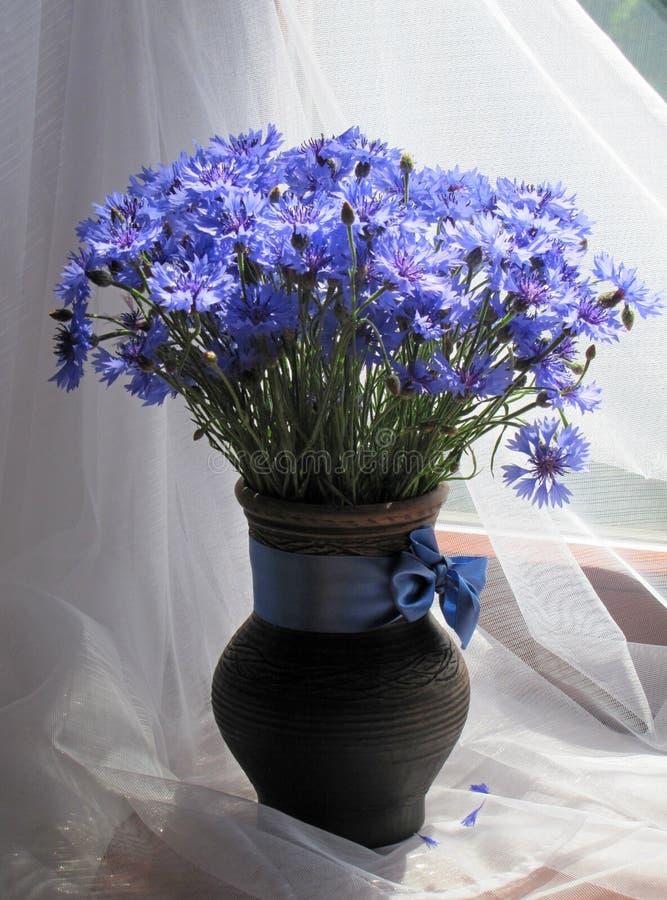 Blumenstrauß von Kornblumen stockfotografie