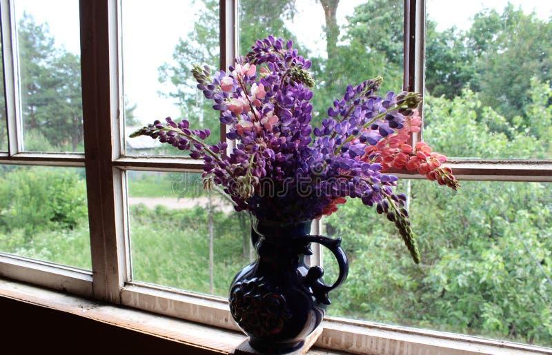 Blumenstrauß von lila und rosa Lupinen in einem blauen Vase gegen das Fenster am Abend lizenzfreie stockfotografie