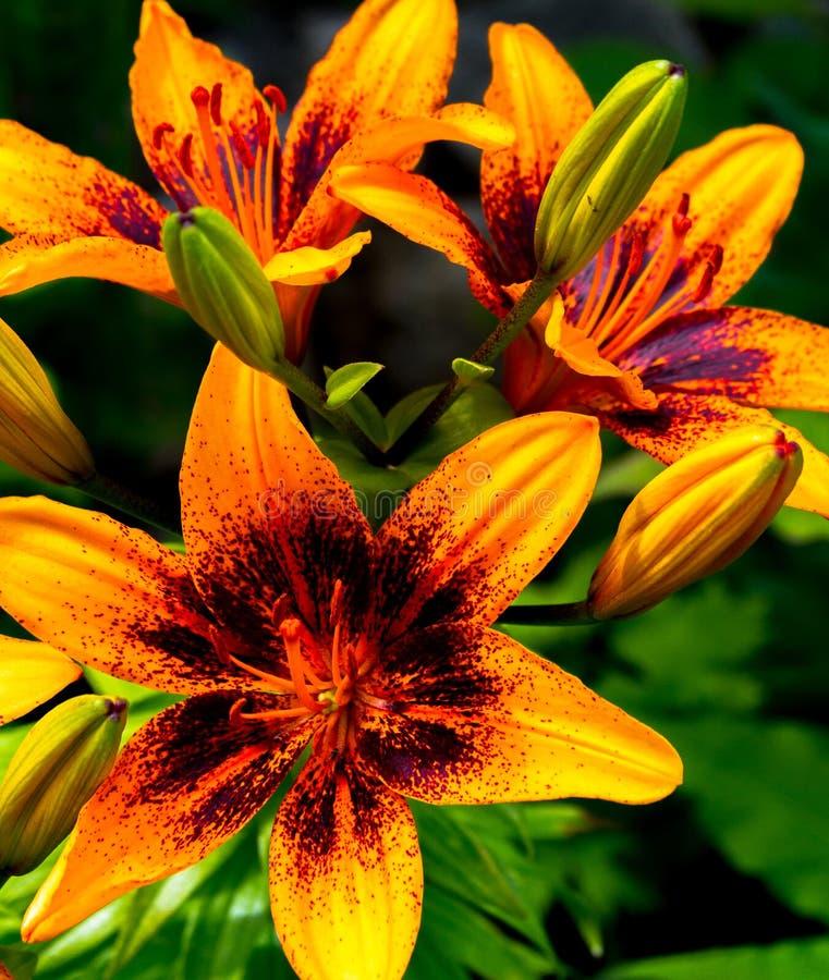 Blumenstrauß von Lillies stockfotos