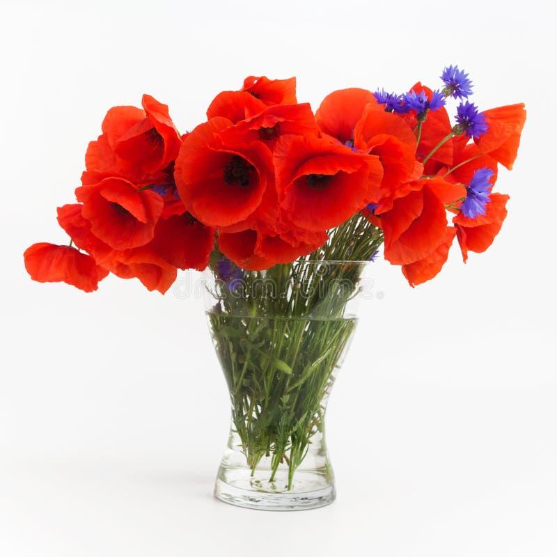 Blumenstrauß von Mohnblumen im Glasvase auf Weiß stockfotografie