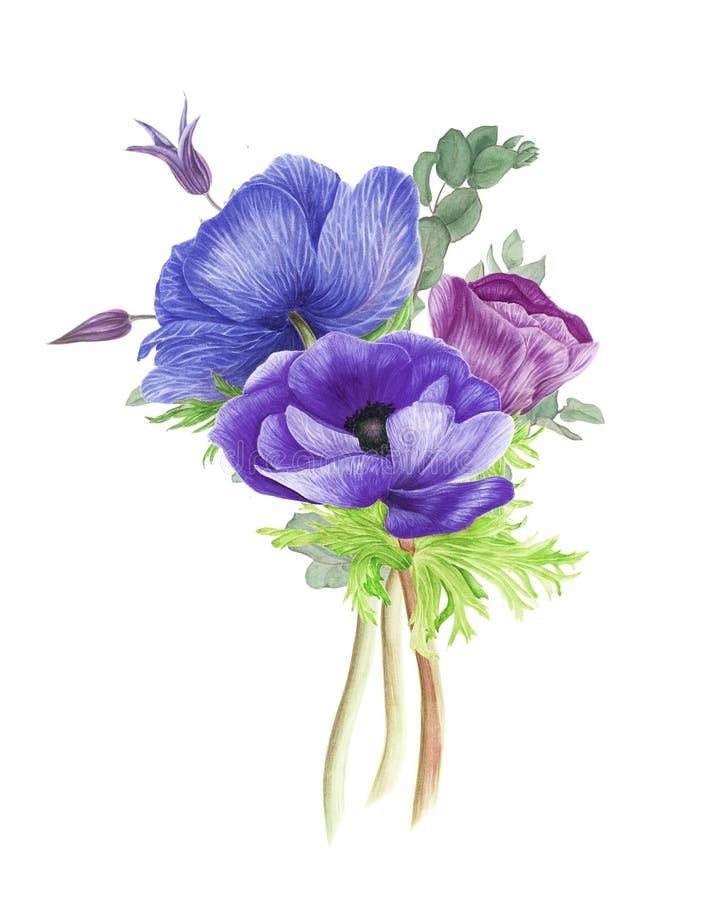 Blumenstrauß von purpurroten und rosa Anemonen, von Klematis und von Niederlassungen des Eukalyptus vektor abbildung