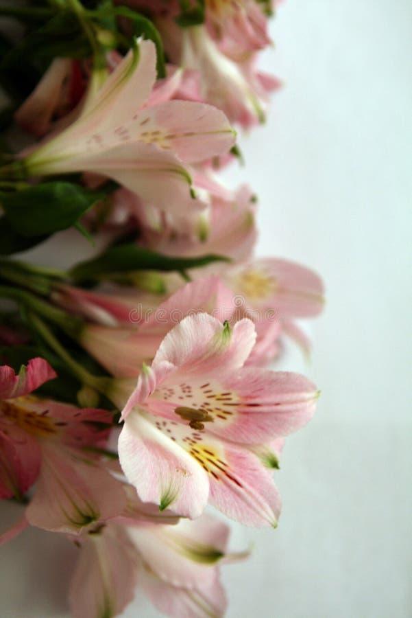 Blumenstrauß von rosa Alstroemeriablumen stockbild