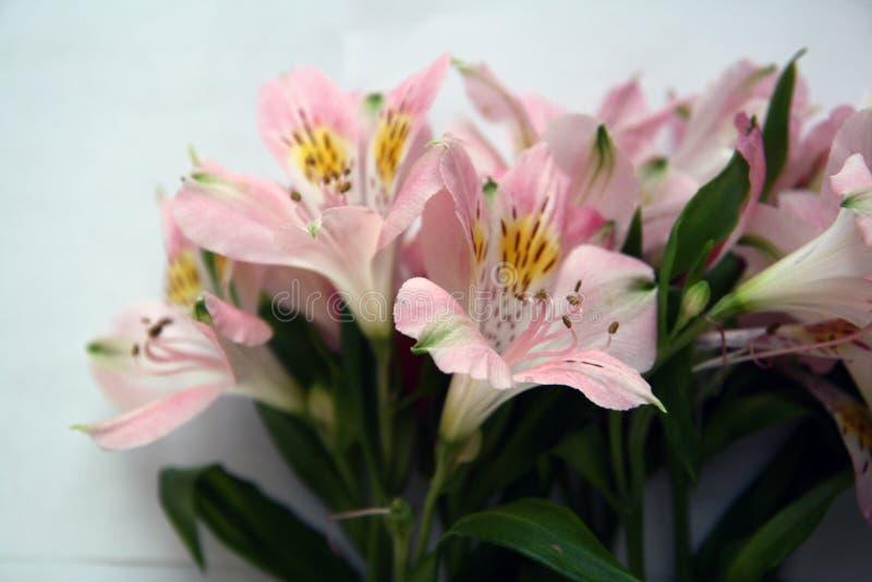 Blumenstrauß von rosa Alstroemeriablumen stockfotos