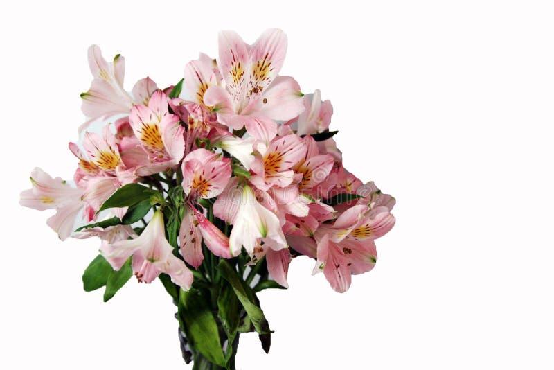 Blumenstrauß von rosa Alstroemeriablumen lizenzfreie stockbilder