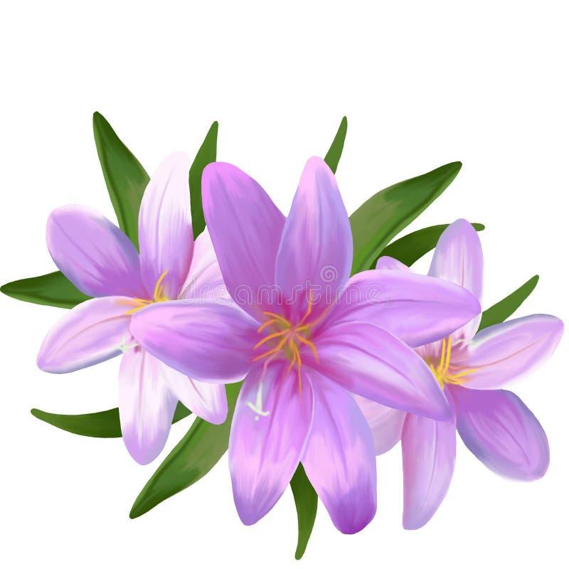 Blumenstrauß von rosa Lilien auf einem weißen Hintergrund stockbild