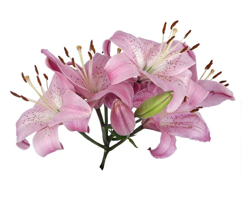 Blumenstrauß von rosa Lilienblumen auf einem leeren Hintergrund lizenzfreie abbildung