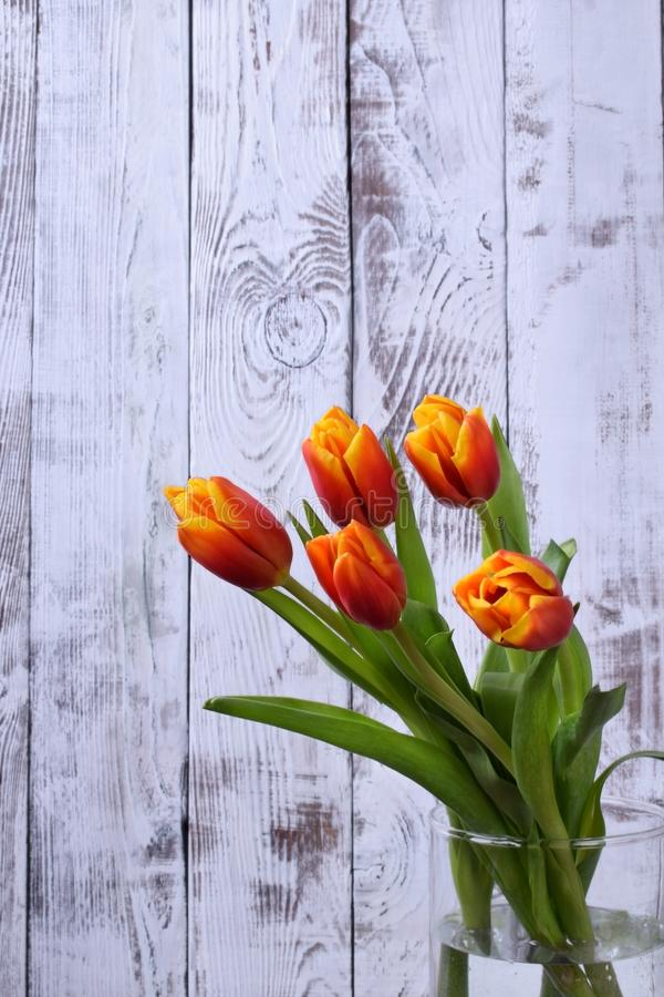 Blumenstrauß von roten und gelben Tulpen gegen den weißen Hintergrund lizenzfreies stockbild