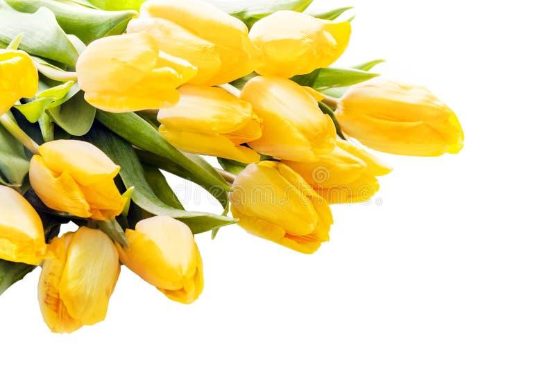 Blumenstrauß von schönen klaren gelben Tulpen stockbild