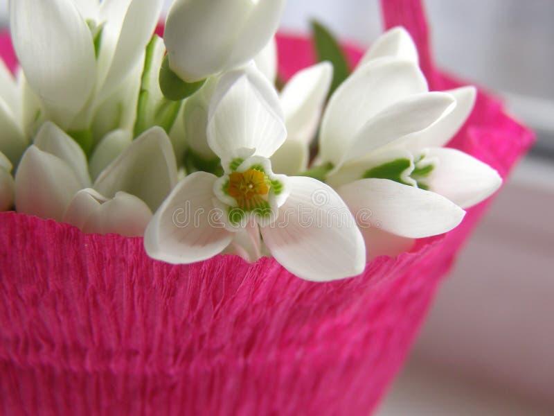 Blumenstrauß von Schneeglöckchen stockbild
