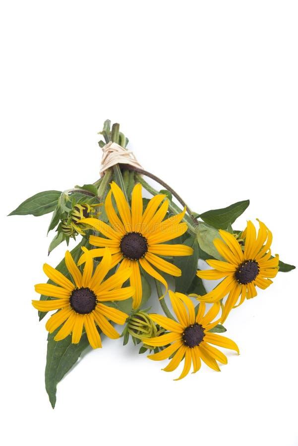 Blumenstrauß von schwarz-gemustert-susans lizenzfreie stockbilder