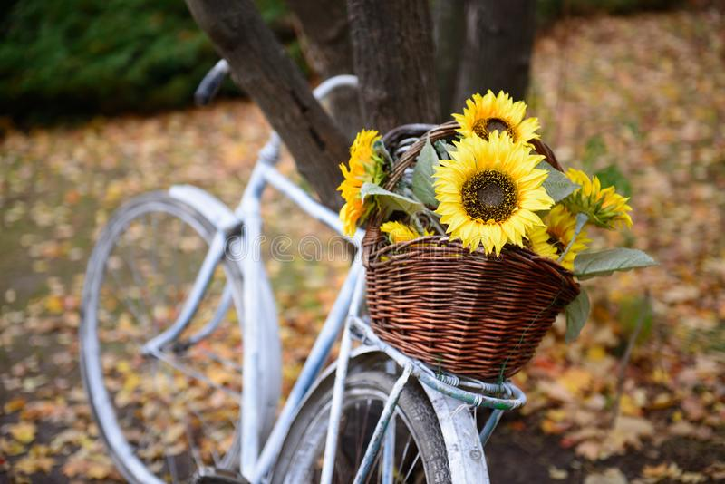 Blumenstrauß von Sonnenblumen auf Retro- angeredetem Fahrrad am Herbstwald lizenzfreie stockfotos