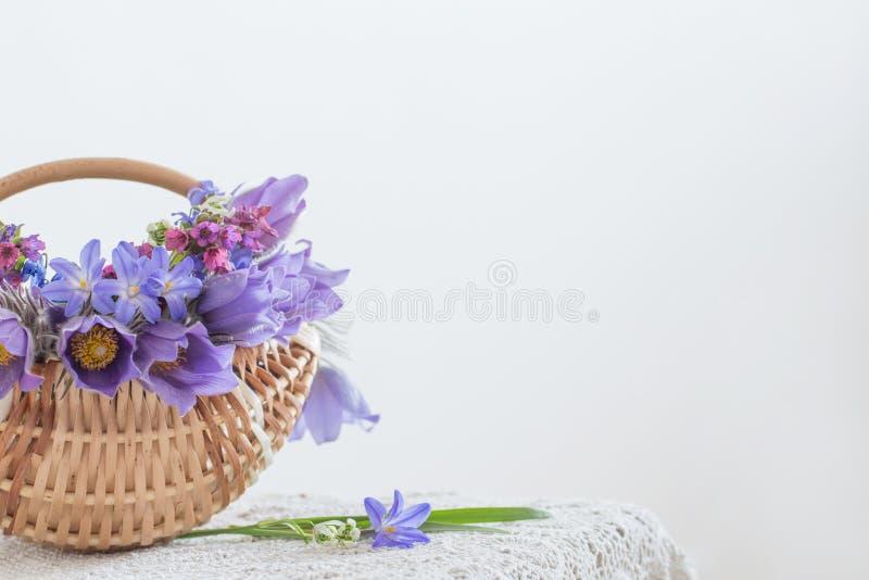 Blumenstrauß von violetten Blumen des Frühlinges auf weißem Hintergrund lizenzfreies stockbild