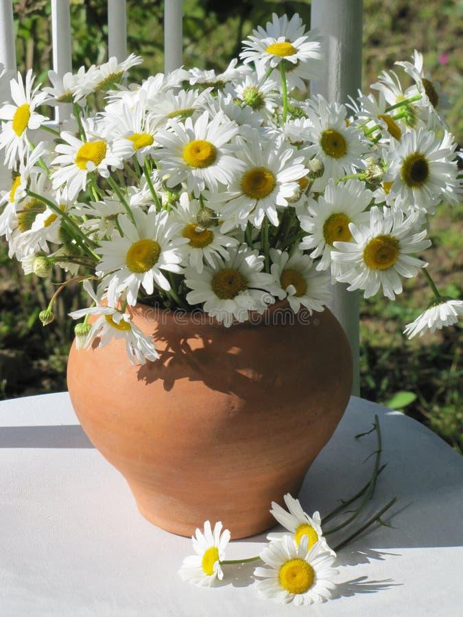 Blumenstrauß von weißen Gänseblümchen stockfotografie