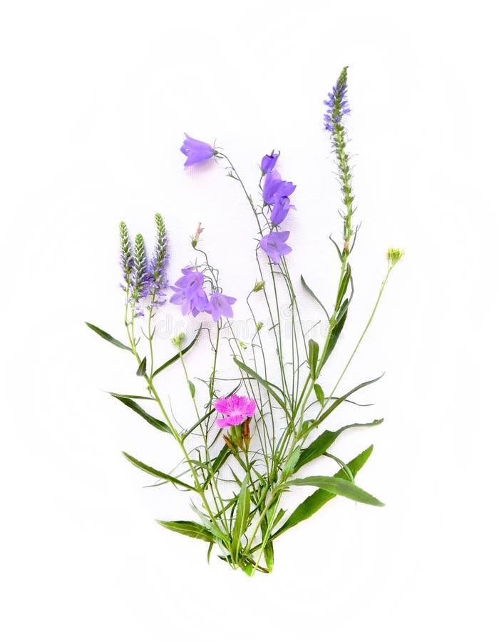 Blumenstrauß von wilden Blumen, Feldglocke, Gartennelkenblume, Lavendel, auf einem weißen Segeltuchhintergrund Draufsicht, Nahauf stockbild