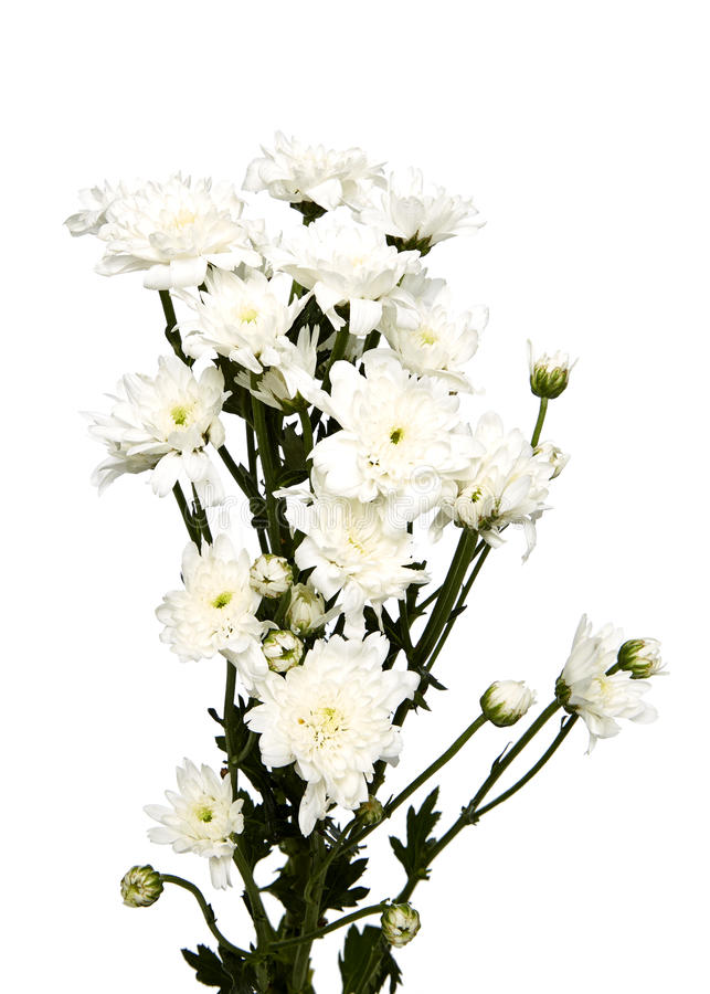 Blumenstraußweißchrysanthemen lizenzfreie stockfotografie