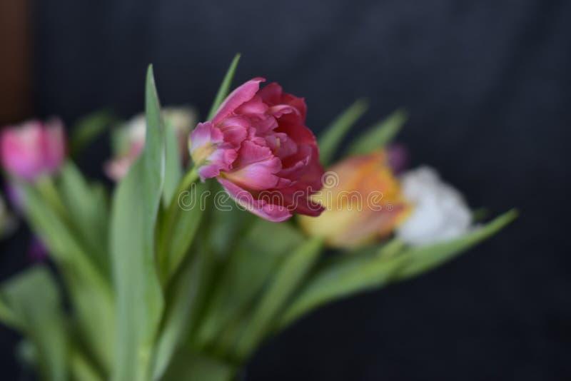 Blumenstrauß verschiedene Farben der Tulpen aus den Grund stockfotos
