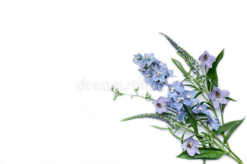 Blumenstrau? der wilden Blumen Getrennte Nachricht auf wei?em Hintergrund Kopieren Sie Platz stockbild