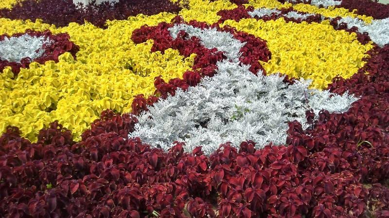 Blumensymphonie lizenzfreie stockfotos