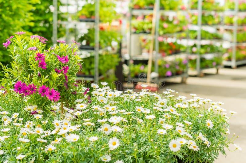 Blumensystem des grünen Hauses in der Gartenmitte stockfoto