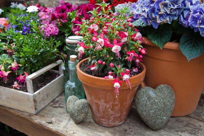 Blumentöpfe auf einem Holztisch lizenzfreie stockfotografie