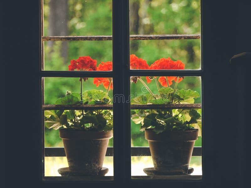 Blumentopf-Entwurfsideen stockfotos