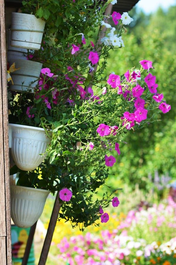 Blumentopf im Freien, der am Bretterzaun f?r kleinen Garten, Patio oder Terrasse h?ngt stockfotografie