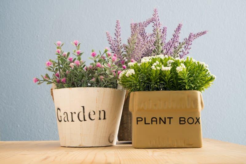 Blumentopf mit bunter Blume auf Holzfußböden stockfotos