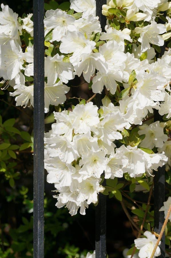 Blumentor lizenzfreie stockfotos