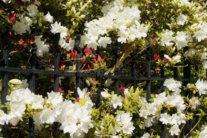 Blumentor stockfoto