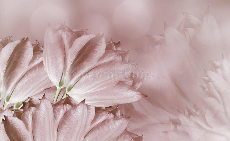 Blumentulpen auf dem Hintergrund weiß-braun Hellbraune Blumentulpen Ausf?hrliche vektorzeichnung Tulpen und Winde auf einem wei?e lizenzfreies stockfoto