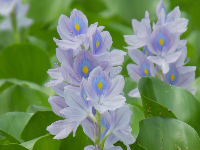 Blumenwachsen am Anfang dieses Sommers stockfoto