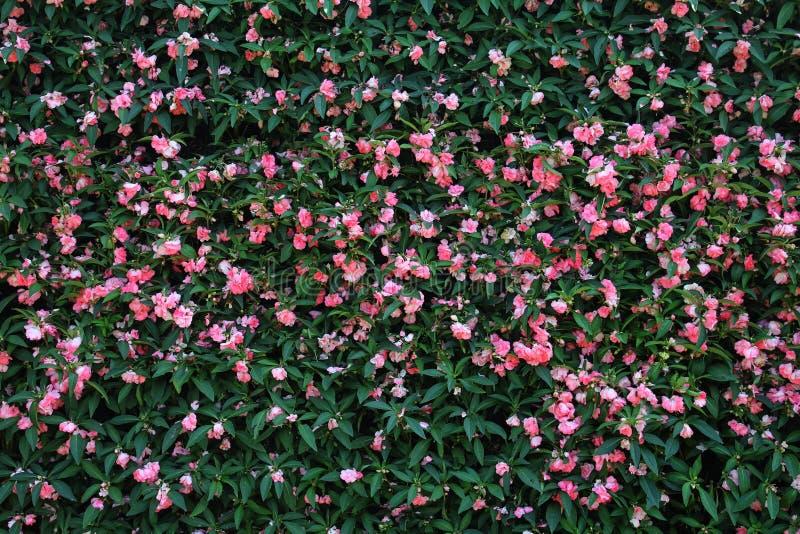 Blumenwand-Hintergrund ฺ lizenzfreies stockbild
