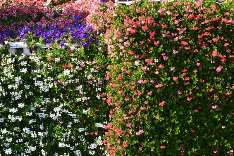 Blumenwand im Garten stockbilder