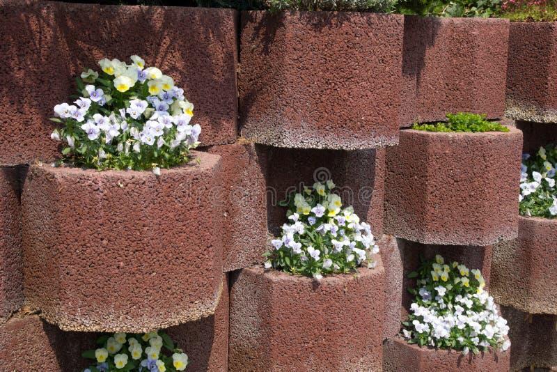 Blumenwannen stockfotos