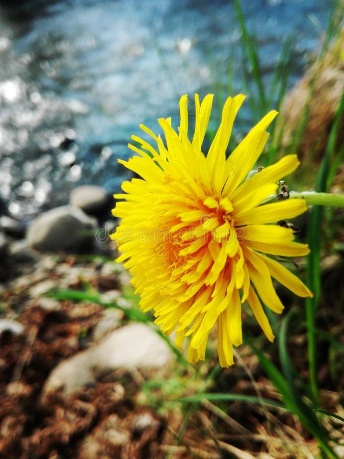 Blumenwasserfelsen stockbild