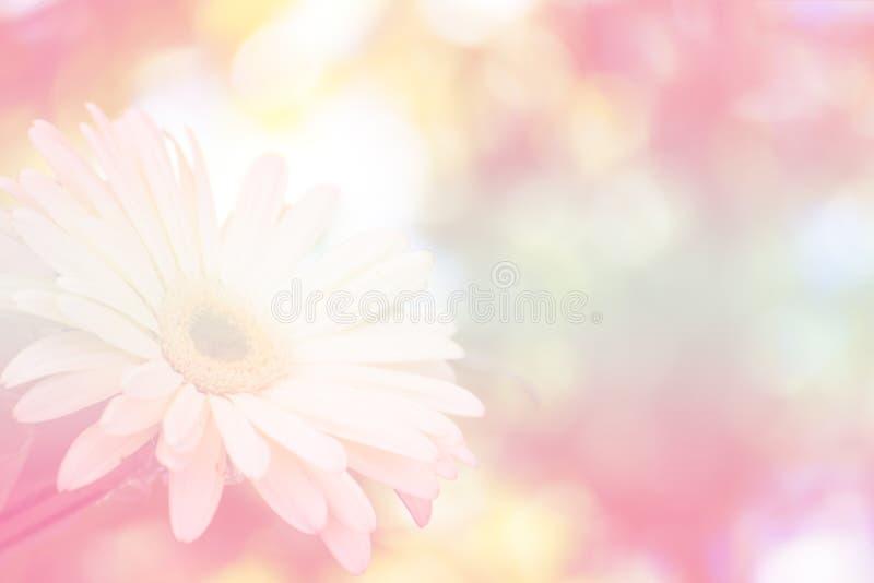 Blumenweichzeichnungshintergrund lizenzfreie stockfotos