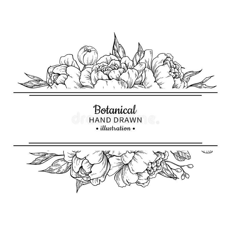 Blumenweinlesegrenze Vektorpfingstrose und botanische Zeichnung der Rosen vektor abbildung
