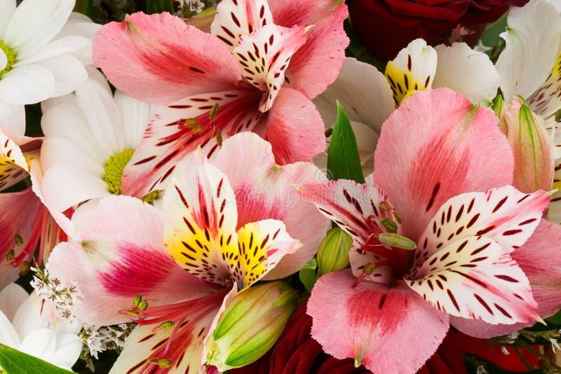 Blumenzusammensetzung lizenzfreie stockbilder