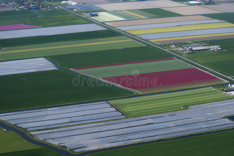 Blumenzwiebelbearbeitung lizenzfreies stockfoto