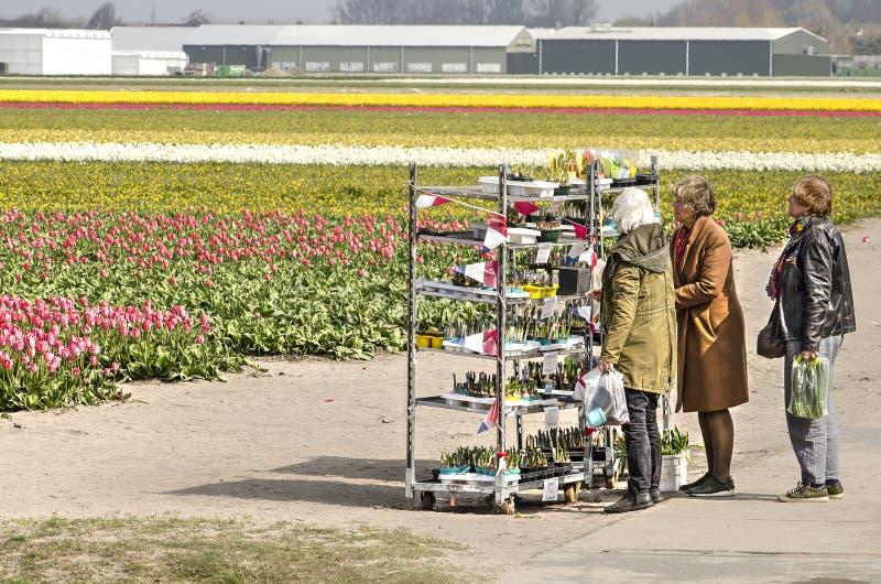 Blumenzwiebeln für Verkauf stockfoto