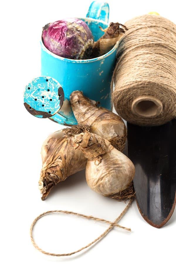 Blumenzwiebeln, Gießkanne, Schnur, Kelle auf Weiß stockfotografie