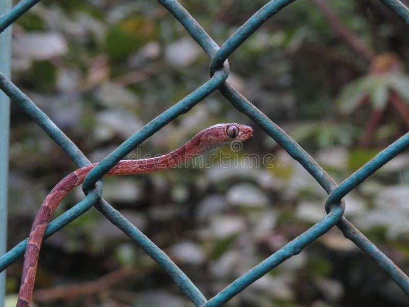 Blunt a serpente dirigida da árvore fotografia de stock