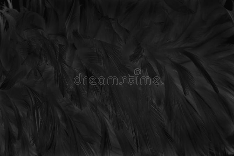Blur beautiful black grey bird feathers pattern for background and design art work.  stock images