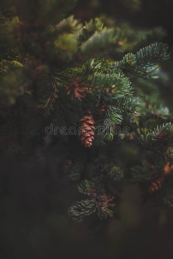 Blur, Branches, Close-up stock image