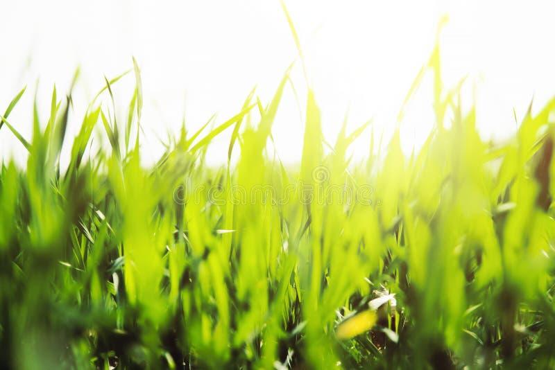 Blur, Close, -up stock image