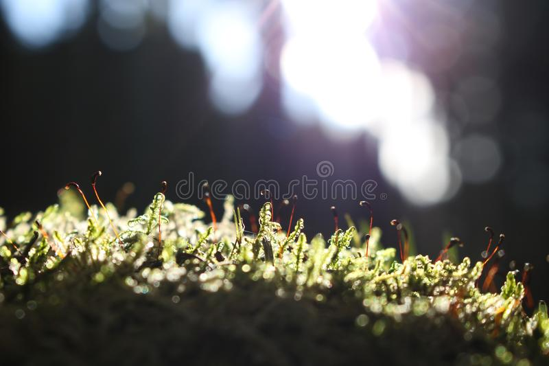 Blur, Close-up, Color royalty free stock images