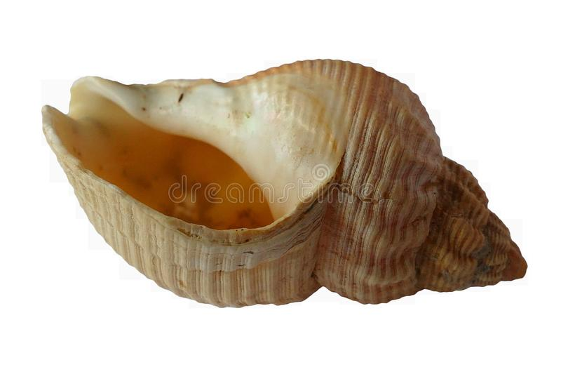 Blur, Close-up, Conch royalty free stock images